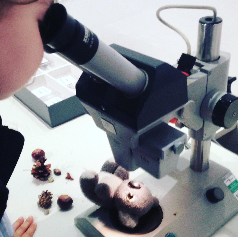 Mikroskopieren mit Kindern im Loki-Schmidt-Haus- Ausflüge mit Kindern für umsonst - immer wenn es regnet
