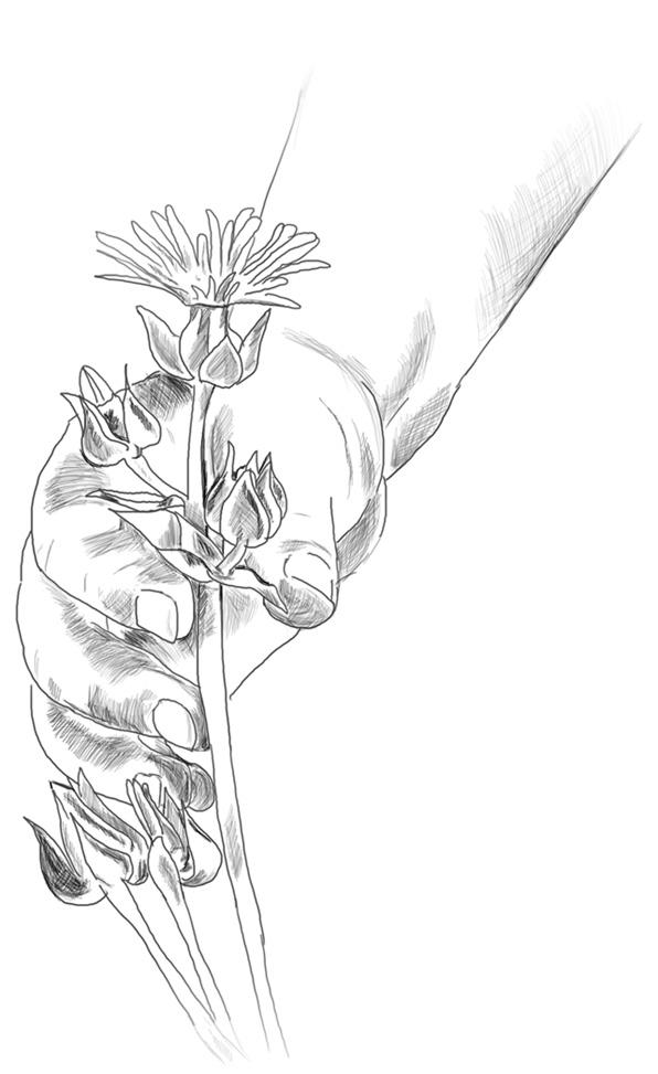 Blumenstrauss - Geschichten aus dem Alltag mit Kindern - kleine Geschichten