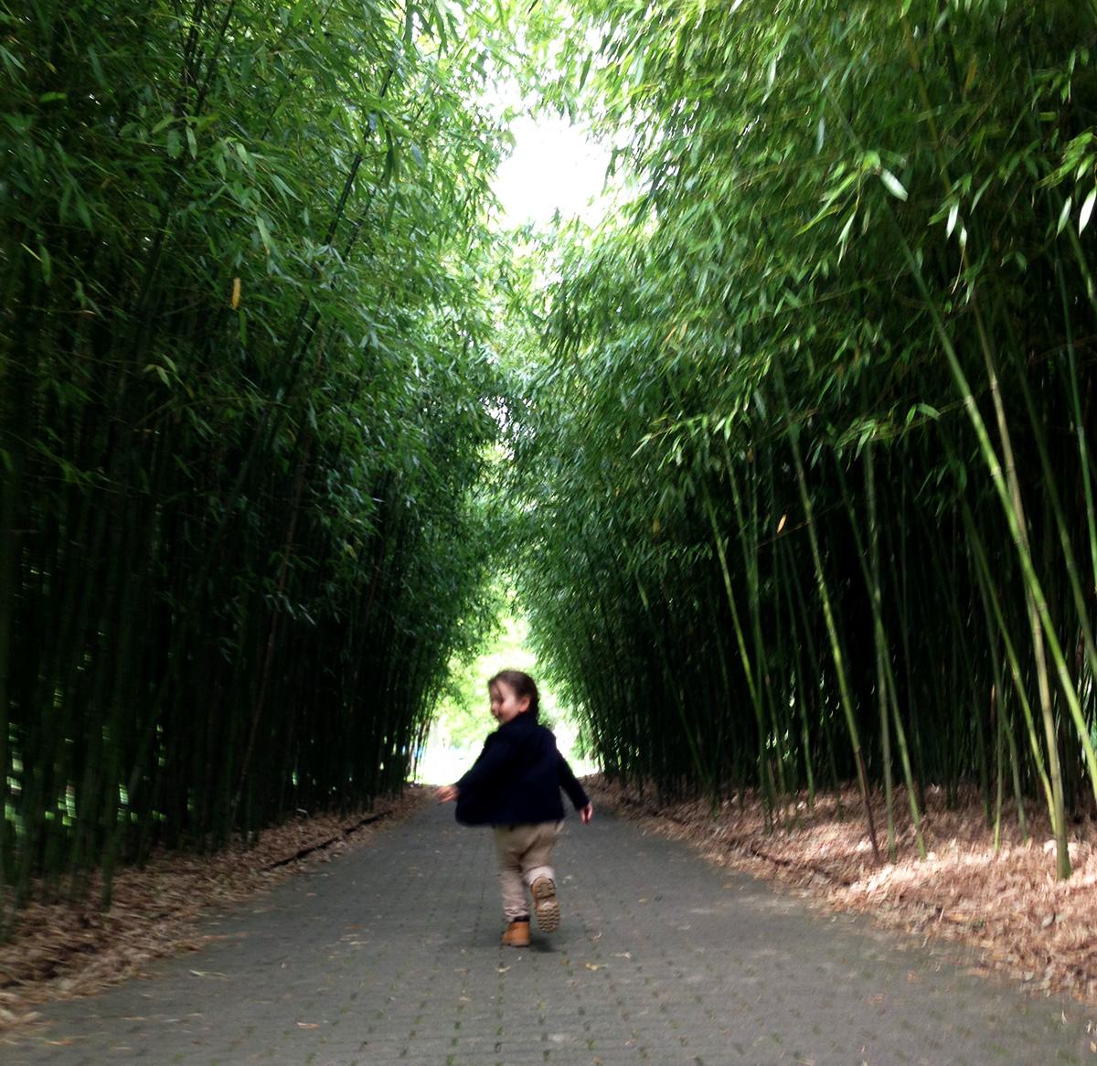 Ausflüge mit Kindern in Hamburg - Botanischer Garten - Klein Flottbek - Kleine Geschichten - Zusammen mit Kindern die Welt entdecken