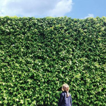botanischer Garten Hambug - Ausflüge mit Kindern in Hamburg - Ausflugsziele - kleine Geschichte